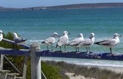 Albatros.2012.Argief foto
